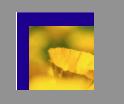 SH logo photo w gray
